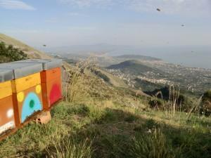 Arnie con api e veduta panoramica